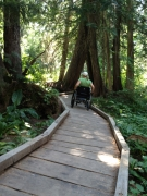 Woman-in-wheelchair-on-Boardwalk-in-the-Woods
