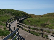 Nobbies,-Phillip-Island